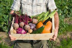 Raw Food Diet Recipe - healthandfitnessnewswire.com
