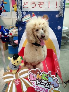 This is Koume from Japan participating in the Pet Expo! わんにゃんドーム