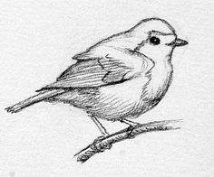 Gallery For gt Sketches Of Birds In Black And White