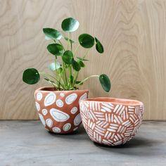 Pilea peperomiodes Chinese Money Plant Missionary by ShopHewittCo