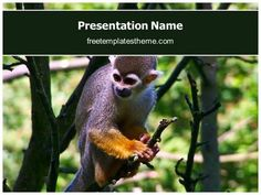 14 best free wildlife animals powerpoint ppt templates images on get free monkey powerpoint template and make a professional looking powerpoint presentation in monkey powerpoint template ppt template edit text and slides toneelgroepblik Gallery