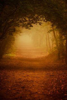 Autumn tunnel by Zoltán Koi