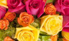 Linguaggio dei fiori: i significati dei colori delle rose. Leggete per evitare una gaffe! | Giardinieri in affitto