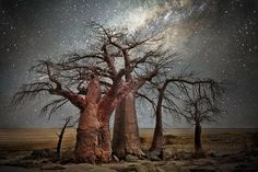 Stunning Images of The World's Oldest Trees Lit Up By The Night Sky