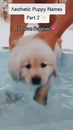 Puppy Names Unique, Cute Animal Names, Cute Puppy Names, Cute Baby Names, Cute Puppy Videos, Cute Little Animals, Funny Animal Videos, Cute Funny Animals, Baby Animals Pictures