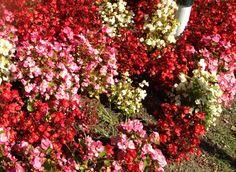 Floral tidings...
