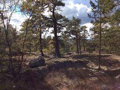 Salaista metsää