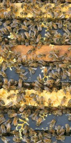 Glacier County Honey Co. in Babb, Montana | glaciermt.com