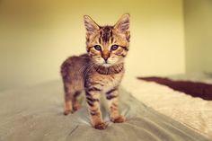 Proteje tus muebles y tus manos, te damos algunas recomendaciones para que sepas qué hacer con las uñas de los gatos.