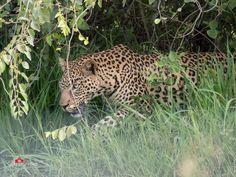 Pilanesberg Nature Reserve 2017 | South Africa