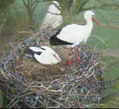 Élő webkamerák - madarlesok.lapunk.hu Bird, Animals, Animales, Animaux, Birds, Animal, Animais