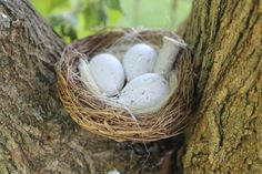 Bird With Nest And Eggs Geocaching Container Set - 2 Piece Multi-Cache