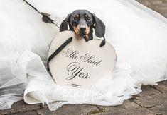 Dachshund with ' she said yes ' sign Pre Wedding Photoshoot, Wedding Shoot, Our Wedding, Destination Wedding, Getting Married Abroad, She Said, Wedding Fair, Days Of Our Lives, North Yorkshire