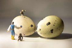 Il salto della quaglia #salto #quaglia #agriturismo #monkey #eggs #egg #foodart àfoodporn #foodstyle #print #digitalfile #bio #cristianmusella #file #agency #marketing #advertising #ped #ilcontadino #contadino #campagna #zoomilano #zoo #animals #nature
