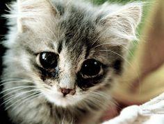animal, cat, cats, cute, cutie, djur