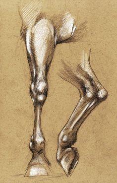 Horse leg anatomy by tirin54.deviantart.com on @deviantART