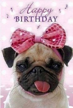 The post Birthday Quotes : Happy Birthday! appeared first on Gag Dad. Happy Birthday Daughter Meme, Happy Birthday Picture Quotes, Happy Birthday Pug, Happy Birthday Wishes Cards, Birthday Wishes Quotes, Happy Birthday Images, Funny Birthday, Birthday Sayings, Happy Birthdays