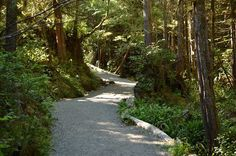 While it may seem obvious that a good hike through a forest or up a mountain can cleanse your mind body and soul science is now discovering that hiking can actually change your brain for the better!  http://ift.tt/1NcwHkc  Photo of the EPIC Wild Pacific Trail in #Ucluelet by T&B Bergeron