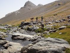 Cant think of too many better ways to spend your spanish summer evenings than in the high mountains! Trekking with mule support Sierra Nevada
