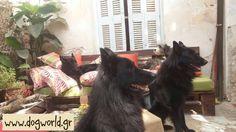 Dogworld.gr Dog Training, Dogs, Animals, Animales, Animaux, Dog Training School, Pet Dogs, Doggies, Animal