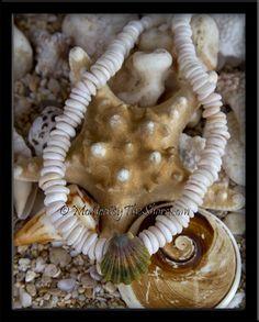 Hawaii Puka Shell & Sunrise Shell LOVE!