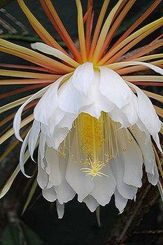 Flores exóticas - Community - Google+