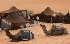 camel.jpg (642×406)