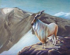 Markhor Mountain Goat by Ciara Barsotti