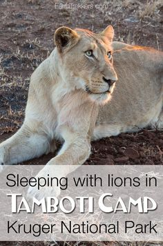 Tamboti Camp Kruger