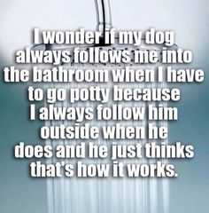 Shower Thoughts: I wonder if my dog always follows me into the bathroom when I have to go potty because I always follow him outside when he does and he just thinks that's how it works.