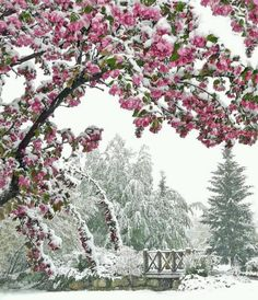 Kindness is like snow, it beautifies everything around it.