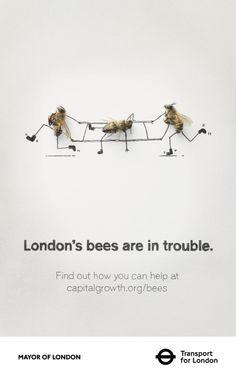 Capital Bee - Saving London's Bees - GOLD WINNER