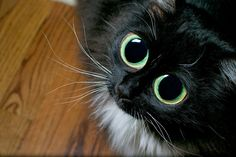 If this cat asked me for my soul, I would probably give it to him! Soo, cute!