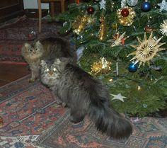 Katzen unter dem Christbaum