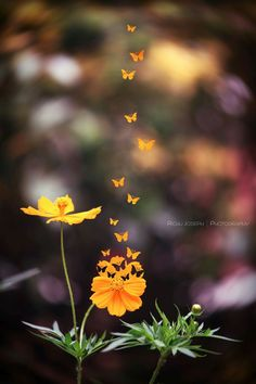 spread your wings and fly away © 2016 Richu Joseph Photography Beautiful Flowers Pictures, Beautiful Flowers Wallpapers, Beautiful Nature Wallpaper, Beautiful Butterflies, Amazing Flowers, Beautiful Images, Wallpaper Nature Flowers, Flower Background Wallpaper, Flower Phone Wallpaper