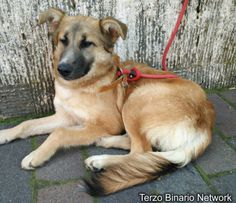 LUCCA (SAN MARCO): SMARRITA SOPHIE, CANE MARRONE http://www.terzobinarionetwork.com/2017/03/lucca-san-marco-smarrita-sophie-cane.html