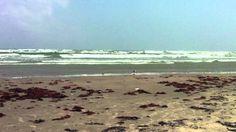 mustang Island Texas beach photos - Google Search
