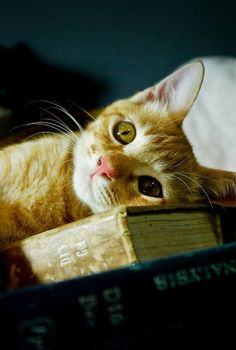 Cat and book - perfect
