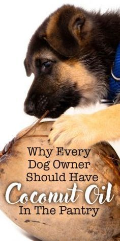 Why Every Dog Owner Should Have Coconut Oil In Their Pantry