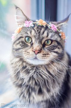 Boys can wear flowers too. by Jzhen cats kitten catsonweb cute adorable funny sleepy animals nature kitty cutie ca