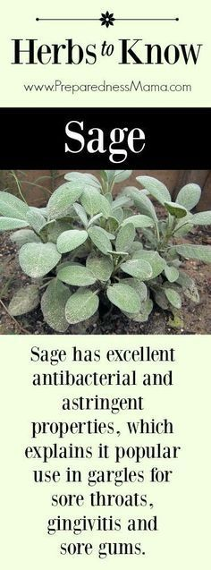 Herbal Medicine Herbs to Know: Sage. It's antibacterial and astringent properties, which explains it popular use in gargles for sore throats, gingivitis and sore gums Healing Herbs, Medicinal Plants, Natural Healing, Herbal Plants, Natural Cures, Herbal Medicine, Natural Medicine, Herbal Remedies, Home Remedies