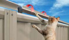 Our outdoor cat fence really works! Keep your cat safely in your own yard and keep stray cats out! Easy to install. Try our outdoor cat fence today. Anti Chat, Cat Fence, Dog Toilet, Outdoor Cat Enclosure, Cat Run, Cat Garden, Unique Cats, Outdoor Cats, Feral Cats