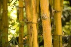 How to Make Faux Bamboo Out of PVC