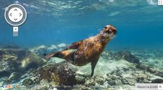 Explore the Galapagos Islands with Google Street View