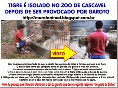 Mural Animal: TIGRE É ISOLADO NO ZOO DE CASCAVEL DEPOIS DE SER PROVOCADO POR GAROTO