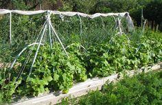 Как сделать каждый год огуречным | Дачный участок | Сад и огород | Постила