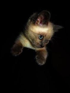 Cats in Art, Illustration, Photography, Decorative Arts, Textiles, Needlework and Design: Kitten.