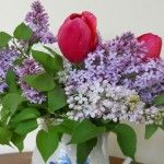 Tips for long-lasting lilacs