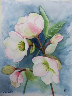 Hellébores. Christmas roses watercolor by Viviane Louwies.