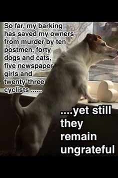 So far, my barking has saved my owners from murder by ten postmen, forty dogs and cats, five newspaper girls and twenty three cyclists...(and 25 UPS and Fedex deliverers)...